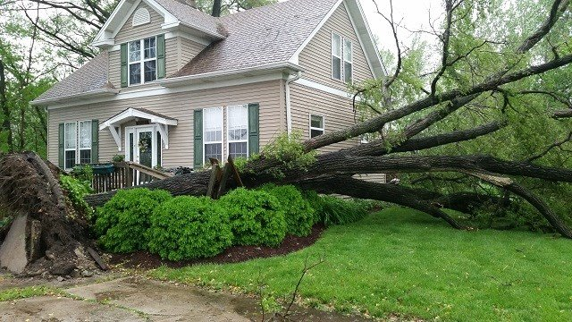 Storm damage in Brentwood