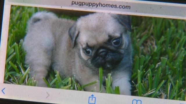 Online puppy scam (Credit: KMOV)