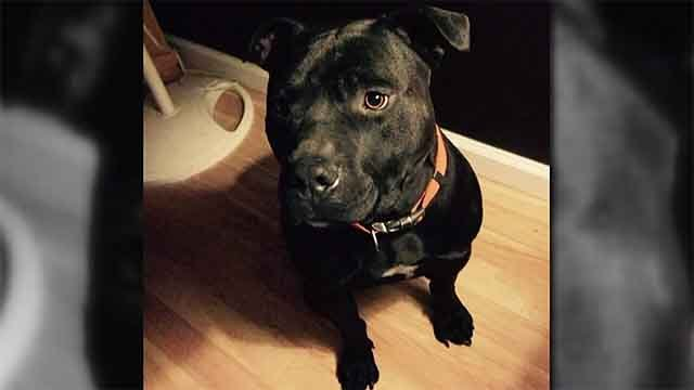 The Franey family of St. Peters does not want their dog euthanized after it was accused of attacking another dog. Authorities say they have no choice but to euthanize the dog. Credit: KMOV