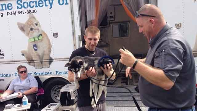The Humane Society of Missouri's Disaster Response Team has returned home from Georgia (Credit: KMOV).