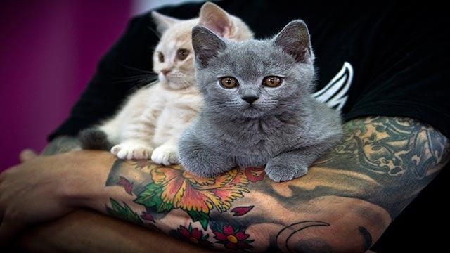 Kittens are held by their owner  (Credit; AP Photo / Vadim Ghirda)