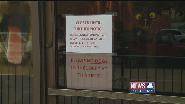 Stray Rescue of St. Louis is temporarily closed after several dogs died from Distemper. Several other dogs tested positive for the disease. Credit: KMOV