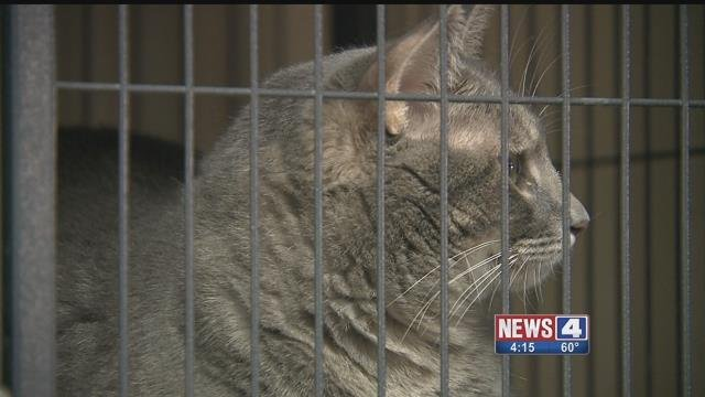 A cat at Partners for Pets in Troy, Illinois. Credit: KMOV