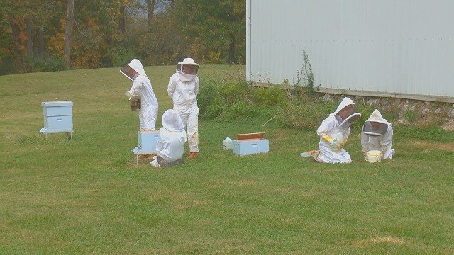 Students get hands on experience working with bees.