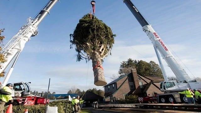 2016 Rockefeller Center Christmas Tree Cutting
