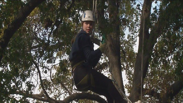 Whitfield School students climb trees to conduct science experiments. (Credit: KMOV)