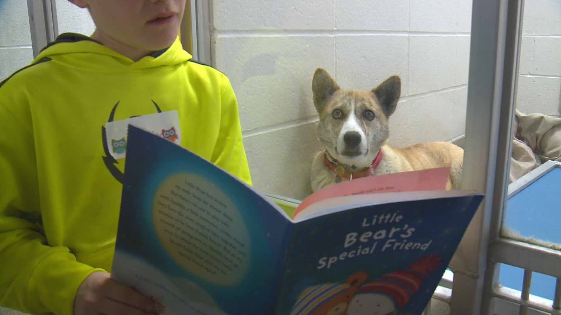 A child reading to a dog at the second annual Deck the Howls party at the Humane Society of St. Louis. Credit: KMOV
