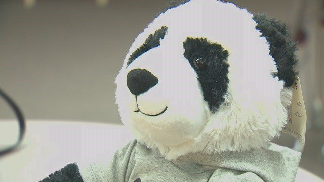"""Proceeds for those that purchase a """"Parker the Panda"""" at Build-A-Bear will go towards scholarships for early childhood education. (Credit: KMOV)"""