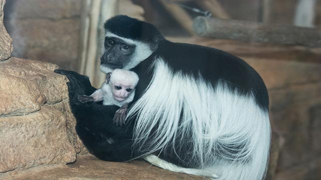 Willow and Cecelia (Credit: St. Louis Zoo)