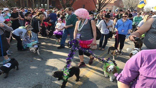 Animal lovers came together in Soulard Sunday afternoon for the 24th Annual Beggin' Pet Parade. (Credit: KMOV)