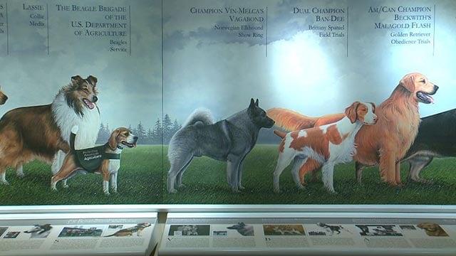 Dog Museum (Credit: KMOV)