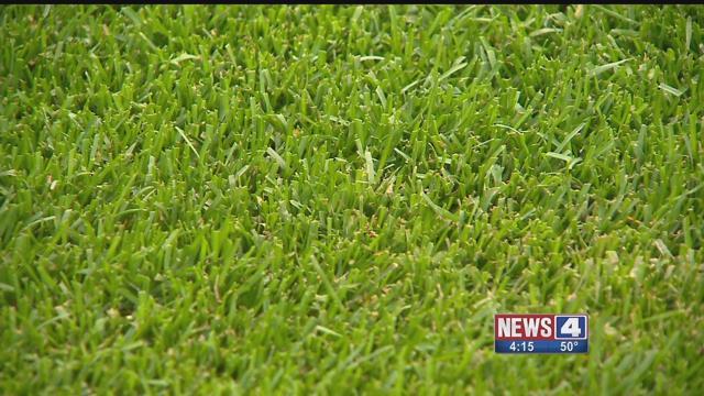New grass at Busch Stadium. Credit: KMOV