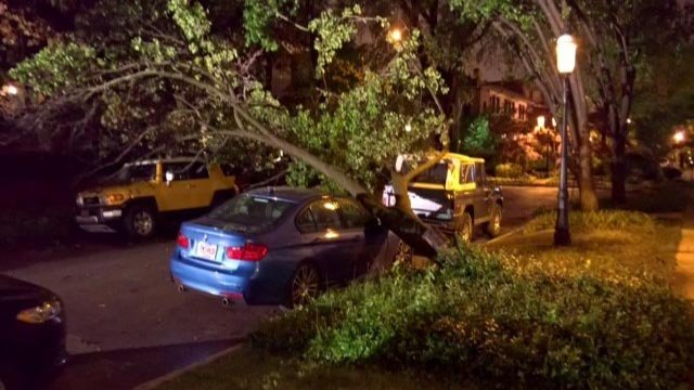A tree fell in the area of Westminster Place near Newstead Thursday (Credit: KMOV)