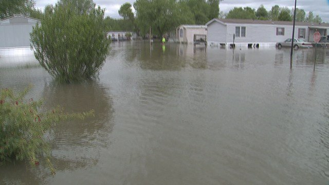Animal shelters are helping pets displaced by recent flooding free of charge. (Credit: KMOV)
