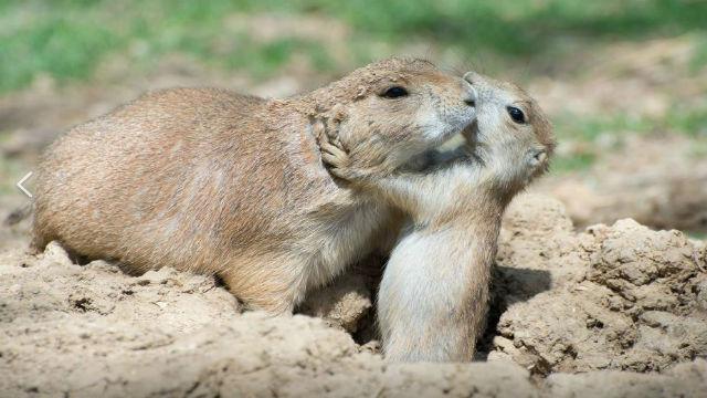 Robin Winkelman/Saint Louis Zoo