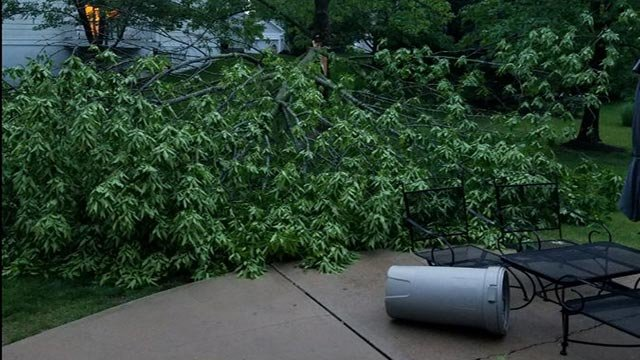 Tree down in Ballwin Friday morning (Credit: John / News 4 viewer)