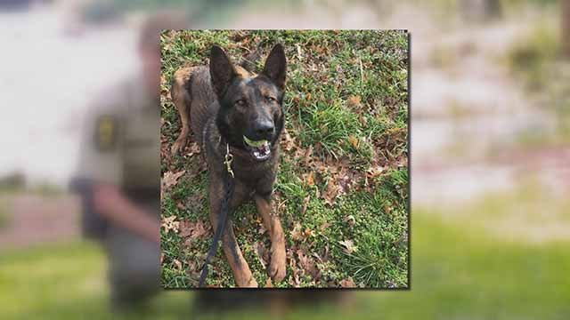 Hunter, a police K-9, was hit by a car during a traffic stop in Washington Park on Memorial Day. Credit: ISP