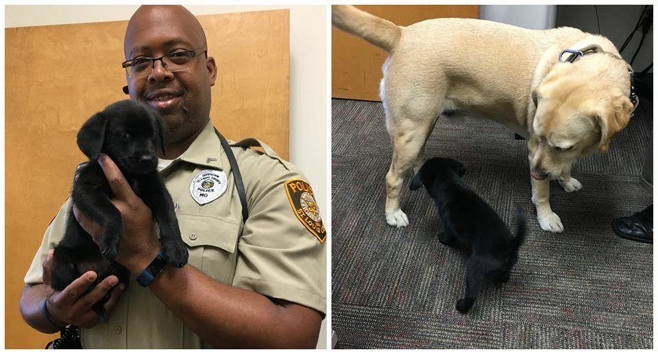 There's a cute new addition to the St. Louis County Police Department! (Credit: St. Louis County Police Department)