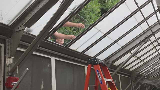 A man broke into a Missouri Botanical Garden greenhouse, but later called and apologized. Credit: KMOV