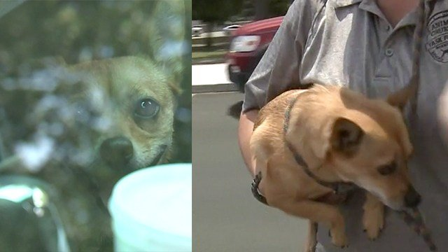 Woman arrested after dog dies in hot vehicle outside hospital