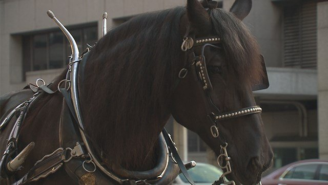 Temperature threshold lowering for horse drawn carriage operations in the city of St. Louis. (Credit: KMOV)