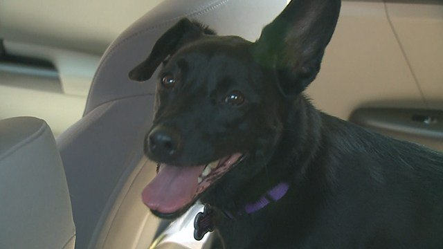 Pet owners are facing limited options for beating the heat after power outages throughout the St. Louis area. (Credit: KMOV)