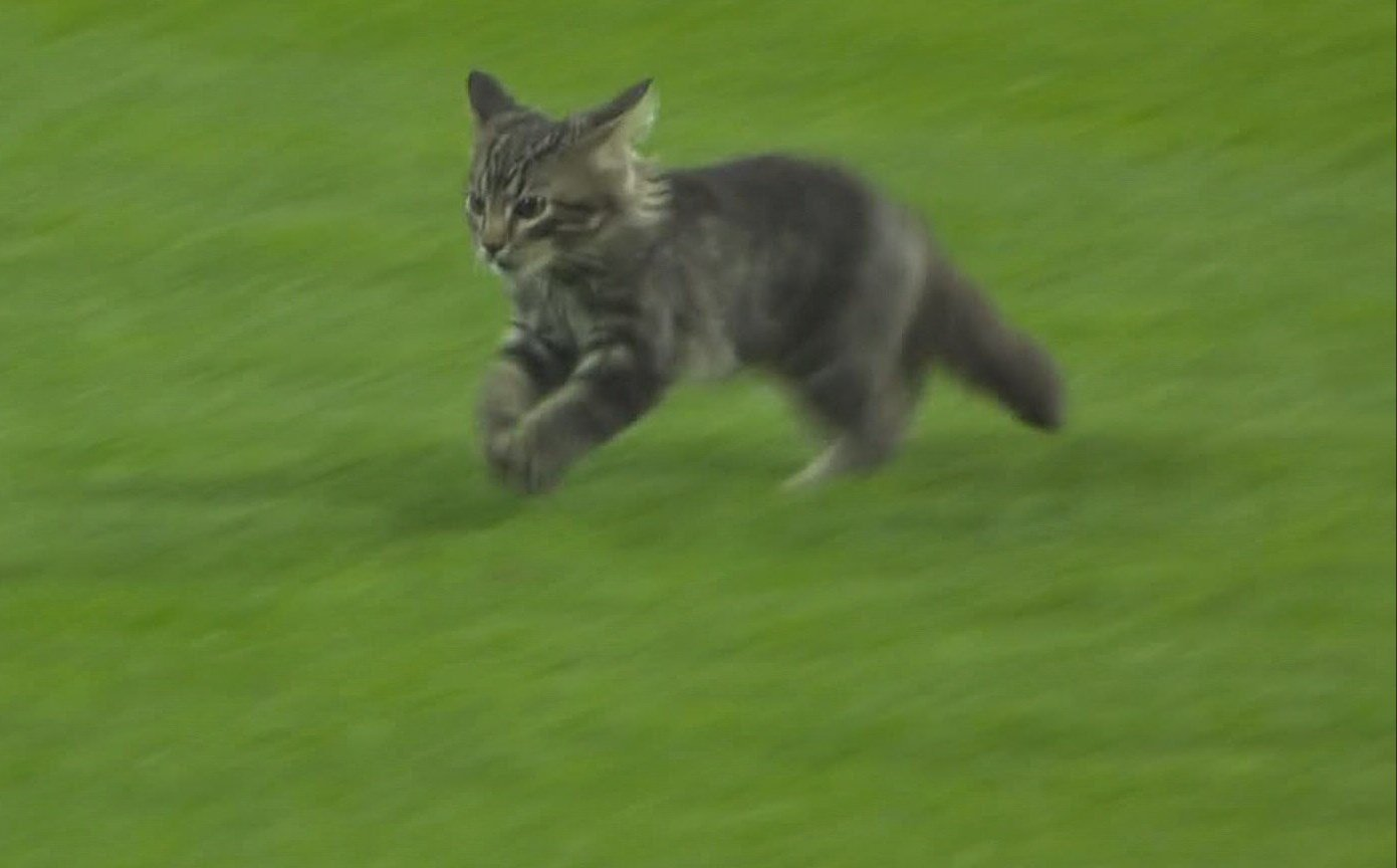 Rogue kitten interrupts baseball game and wins it with cuteness