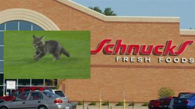 Schnucks is offering 50 percent of cat necessities through Sunday (Credit: KMOV)