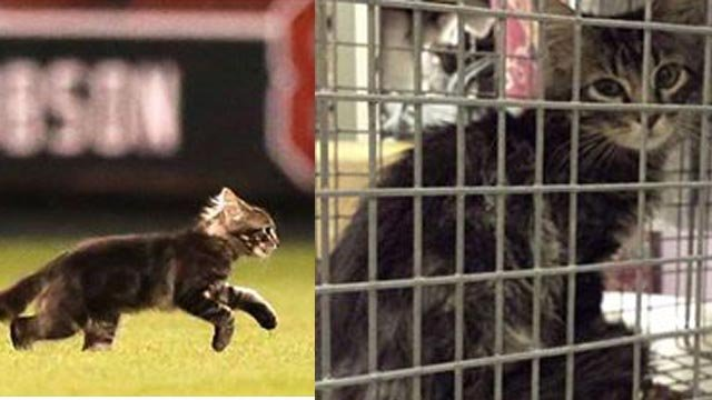 Rally Cat on the Busch Stadium field (Credit Left) & The cat trapped by City Garden (Credit: Right) (Credit: St. Louis Feral Cat Outreach / Facebook)