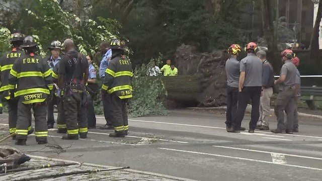 A mother and three children were injured when a tree fell on them in Central Park. (Credit: CBS)
