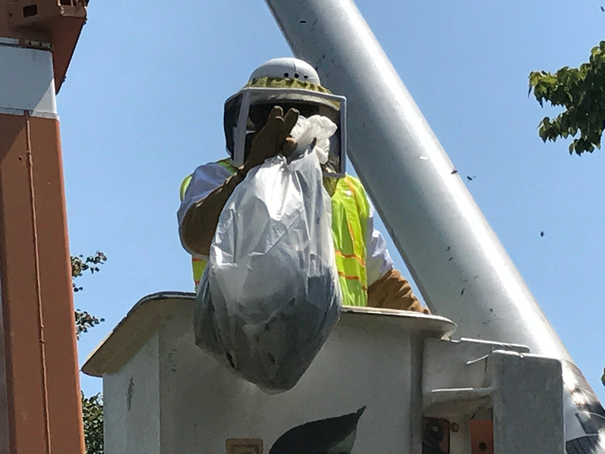 A St. Louis Forestry Division worker put a bag around a large hornets nest and cut it from a tree in the 3100 block of Whittier