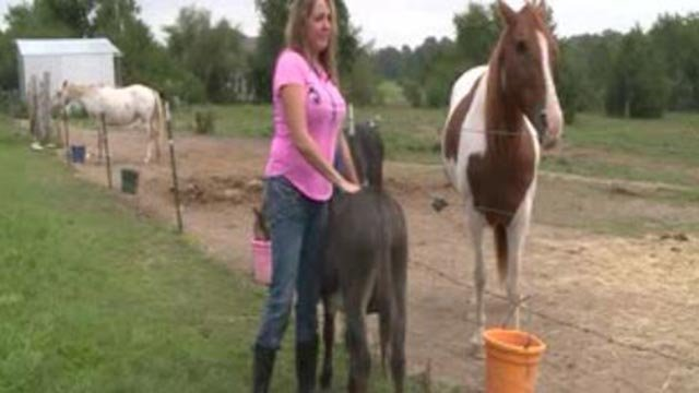 A glimpse of the 'No Time To Spare Animal Rescue and Sanctuary' in St. Charles County (Credit: KMOV)