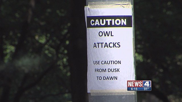 Missouri residents told News 4 they are scared to leave their homes after several families became targets of owls. (Credit: KMOV)
