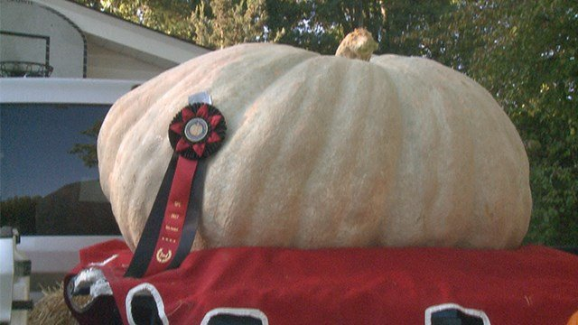 Second place winner weighing in at 650 lbs. (Credit: KMOV)