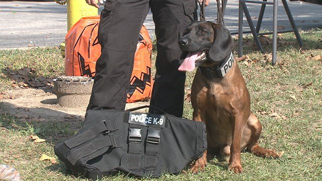 """A St. Charles County Police dog received a new vest at """"Dogtoberfest."""" (Credit: KMOV)"""
