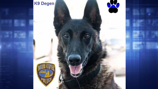 Wood River K9 Officer Degen will be laid to rest Wednesday (Credit: Wood River Police)