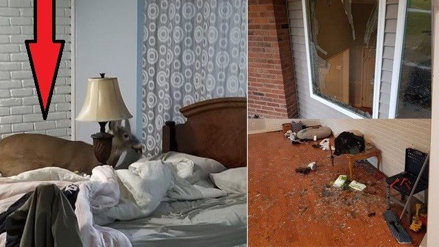 Homeowners in Chesterfield walked into a shocking surprise after they found a deer inside their residence Thursday afternoon. (Credit: Chesterfield Police Department)