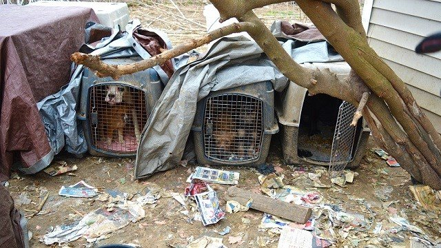 101 dogs and cats were rescued from Bates County, Missouri Dec. 20. (Credit: Humane Society of Missouri)