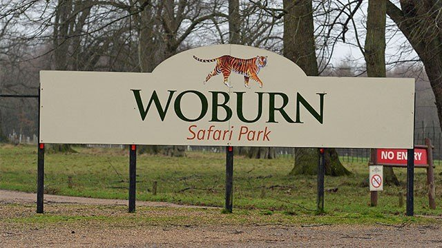Monkeys die in fire at Woburn Safari Park