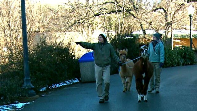 Several animals have been moved inside at the St. Louis Zoo due to the frigid temperatures.  (Credit: KMOV)