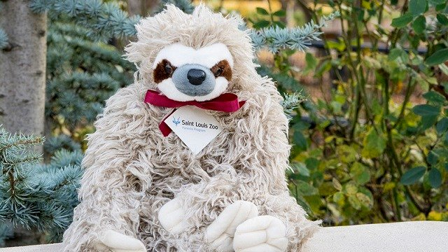 A plush sloth is part of the adoption package. (Credit: Robin Winkelman, Saint Louis Zoo)