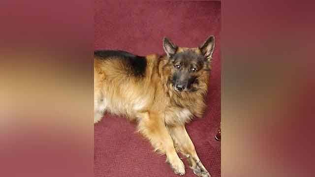 Two men armed with guns robbed an Olivette jewelry store took off with watches and shot and killed store owner's dog.(Credit: TimeKeepers)