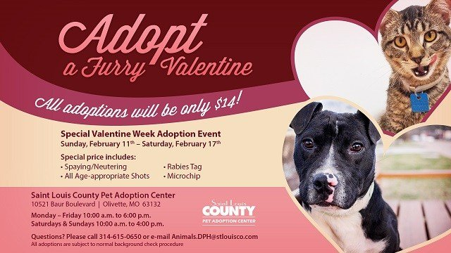 (Credit: St. Louis County Pet Adoption Center)