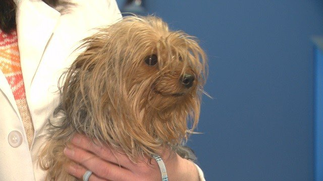 A dog at the Animal Medical Center of Mid-America. (Credit: KMOV)
