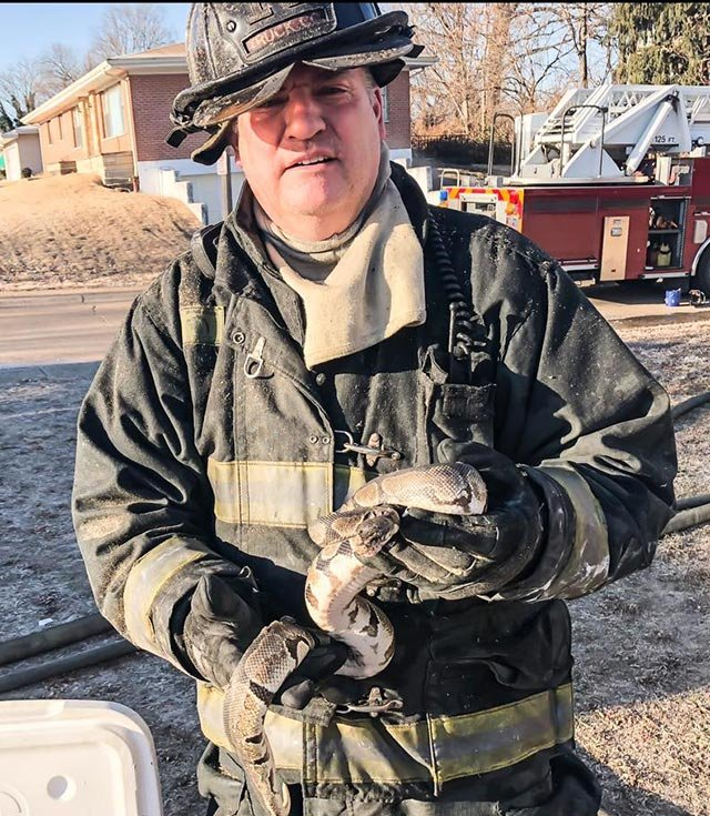A St. Louis firefighter holding a ball python after it was rescued from a home Monday (Credit: St. Louis Fire Department)