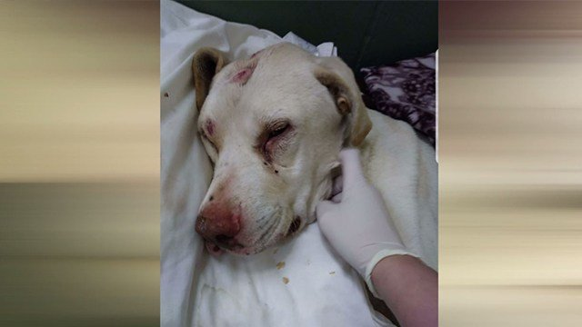 Trooper was beaten, shot and left for dead in a ditch in Farmington (Credit: KMOV)