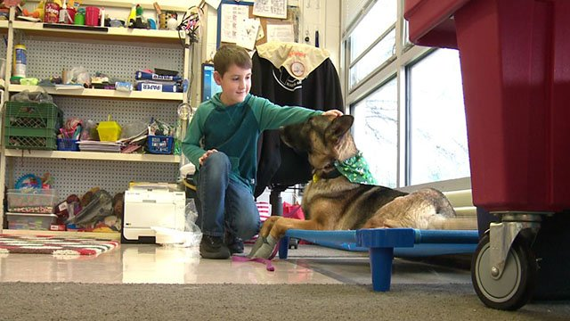 A Meisner Primary School student pets therapy dog Stormy inside the classroom ( Credit: KMOV)
