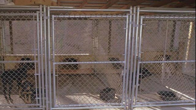 Dogs in kennels at animal shelter (Credit: AP Images)