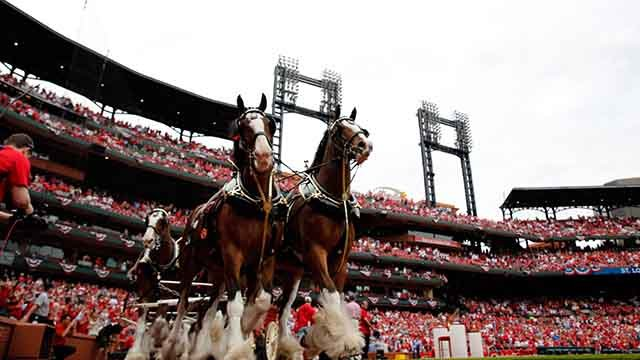 Budweiser clydesdales round the warning track around Busch Stadium before the start of a baseball game between the St. Louis Cardinals and the Milwaukee Brewers on the home opener Monday, April 13, 2015, in St. Louis. (AP Photo/Jeff Roberson)