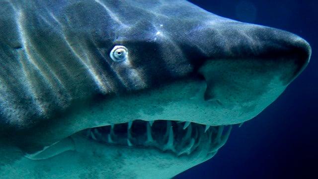 Shark mauls surfer off southwest Australia, injuring legs